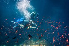 Scuba instructor diving with student near coral reef in Red sea Royalty Free Stock Image