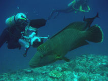 Scuba Photographer. A Scuba photographer shooting a fish Stock Photography