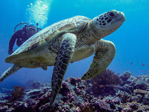 Scubadiving in Malaysia royalty free stock images