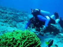 Scubadykare och korall Royaltyfri Fotografi