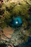 SCUBAdykare och undervattens- grotta arkivbilder