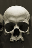 Scull. Skull in Kutna Hora ossuary, Czech Republic Stock Photo