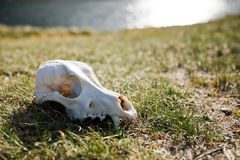 Scull Stock Photo