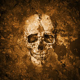 Scull Royalty Free Stock Image