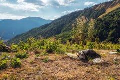 Scull dos carneiros que encontra-se na terra com paisagem da montanha atrás foto de stock
