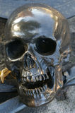 Scull on grave Royalty Free Stock Photography