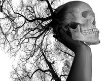 Scull Royalty Free Stock Photo