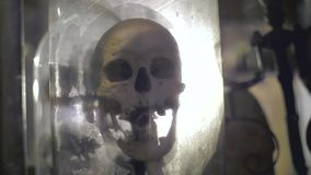 Scull humano real metrajes