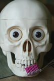 Scull with toothbrush Stock Photography
