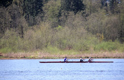 Sculling in Burnaby Lake. A group of three people practice the sport of sculling in their four people shell. This is taken in Burnaby Lake, BC, Canada stock photo