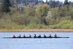 Sculling in Burnaby Lake. A team of nine practices the sport of competitive sculling in their 8 people shell. This is taken in Burnaby Lake, BC, Canada royalty free stock photo