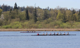 Sculling in Burnaby Lake Royalty Free Stock Images