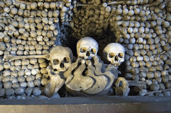 Sculls e ossos Imagem de Stock