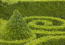 Sculpted Boxwood Royalty Free Stock Photography