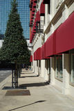 Sculpted evergreen tree in urban setting. Landscaping in urban centers can be beautiful and challenging. Here a row of trees contrasts with red window awnings of Royalty Free Stock Images