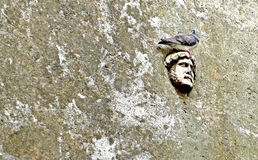 Sculpted face. A pigeon rests on a lonely mask in an alleyway on the Tuscan coast of Italy stock images