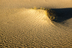 Sculpted Sands abd Desert Brush Stock Photos