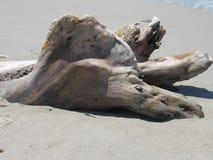 Sculpture blanche en bois de flottage sur le sable blanc Photographie stock libre de droits