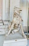 Sculpture de marbre antique en chien à Vatican, Italie Photos libres de droits