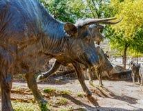 Sculpture des bétail de Longhorn sur une traînée Image stock