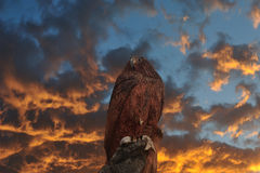 Sculpture of eagle. With beautiful sunset like fire, the sculpture of eagle made from wood Stock Photos