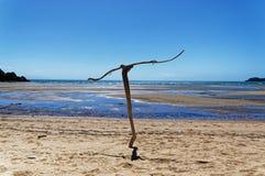 Sculpture en bois de flottage sur la plage photos stock