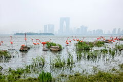 Sculpture en ville de lac suzhou Jinji --- Flamant Images stock
