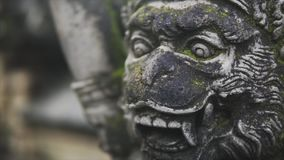 Sculpture in the wild tropical jungle, detailing the weathered surface with white fungus and moss. Lush vegetation and. Sculpture of the gods, spirits and stock footage