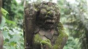 Sculpture in the wild tropical jungle, detailing the weathered surface with white fungus and moss. Lush vegetation and. Sculpture of the gods, spirits and stock video