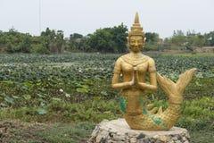 Sculpture of a golden Siren. Battambang, Cambodia. Sculpture of a golden mermaid praying surrounded by fields of lotus flowers. Battambang, Cambodia Stock Images