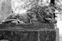 Sculpture of a lion in Lviv, Ukraine. Old stone sculpture of a sleeping lion in Lviv, Ukraine - black and white royalty free stock image