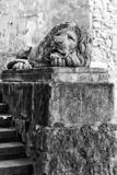 Sculpture of a lion in Lviv, Ukraine. Old stone sculpture of a sleeping lion in Lviv, Ukraine - black and white stock photography