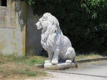 Sculpture of lion. A marble sculpture often used to embellish the entrances of houses that depicts a seated lion with his mane royalty free stock images