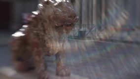 Sculpture of a lion on Piazza San Marco, rays of light an unusual effect, blur and toning stock video footage