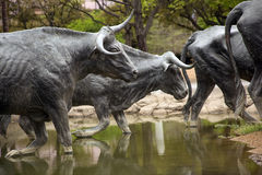 Sculpture of longhorn cattle crossing a stream Stock Image