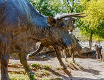 Sculpture of Longhorn cattle on a trail Stock Image