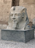 Sculpture at Luxor Temple in Egypt Stock Photography