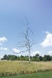 Sculpture oblique par Roxy Paine de Carolina Museum du nord d'art Photo stock