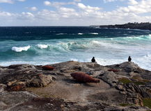 Sculpture by the Sea in Bondi Royalty Free Stock Images