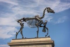 Sculpture of skeletal horse in Londons Trafalgar Square Royalty Free Stock Image