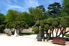 Sculptured cypress trees in Buen Retiro public park, Madrid, Spain.  stock images