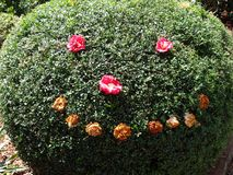A sculptured hedge in a garden with decorations of flowers royalty free stock photography
