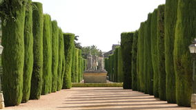 Sculptured trees in Alcazar garden, Cordoba. The sculptured trees in the Alcazar gardens, Cordoba, Spain Royalty Free Stock Images