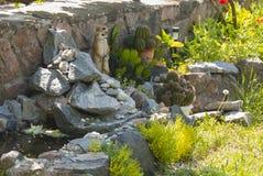 Sculptures drôles en jardin Photo libre de droits