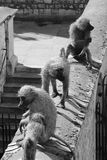 Sculptures en singe à la tour de Londres Image libre de droits