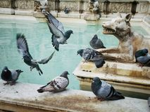 Sculptures and pigeons Royalty Free Stock Images