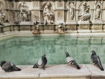 Sculptures and pigeons Royalty Free Stock Photography
