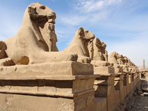 Sculptures at Precinct of Amun-Re in Egypt Stock Image