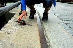 Scultura bronzea del ratto, Stoccolma Immagini Stock Libere da Diritti