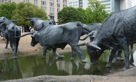 Scultura del bestiame della mucca texana che attraversa una corrente Fotografia Stock Libera da Diritti